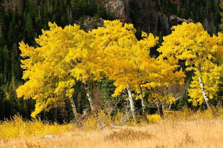 фото, природа, красивые фото природы, фотопейзажи, осень (15)