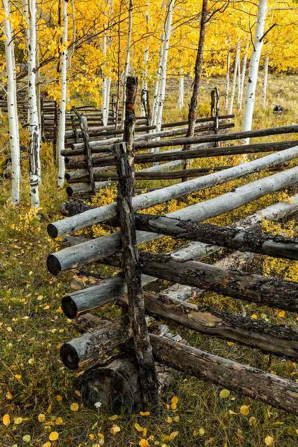 фото, природа, красивые фото природы, фотопейзажи, осень (8)