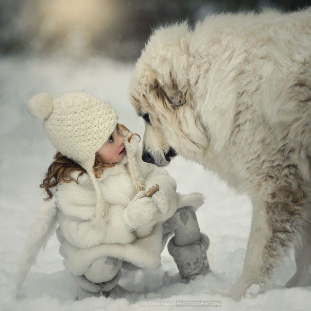фото, животные, прикольные фото животных (24)