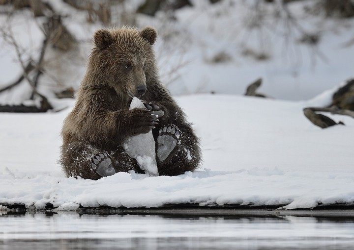 фото, животные, прикольные фото животных (25)