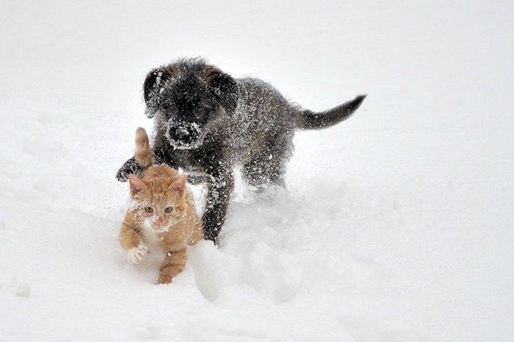фото, животные, прикольные фото животных (26)