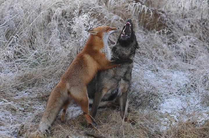 фото, животные, необычная дружба (3)
