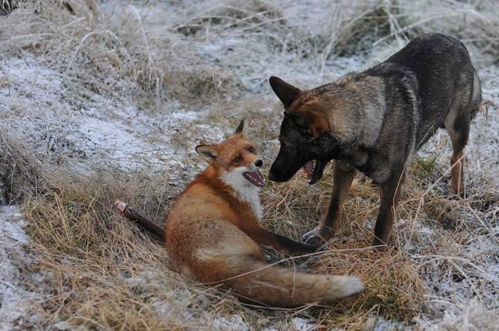 фото, животные, необычная дружба (5)