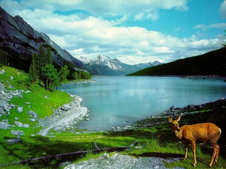 фото, природа, красивые фото природы, фотопейзажи (18)