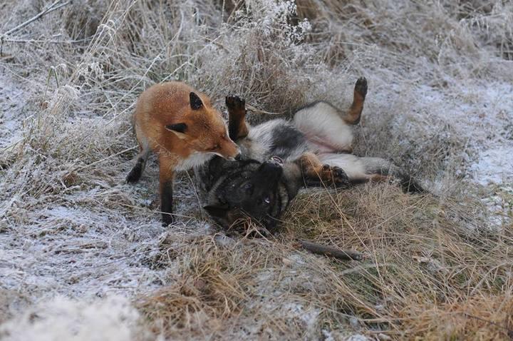 фото, животные, необычная дружба (7)