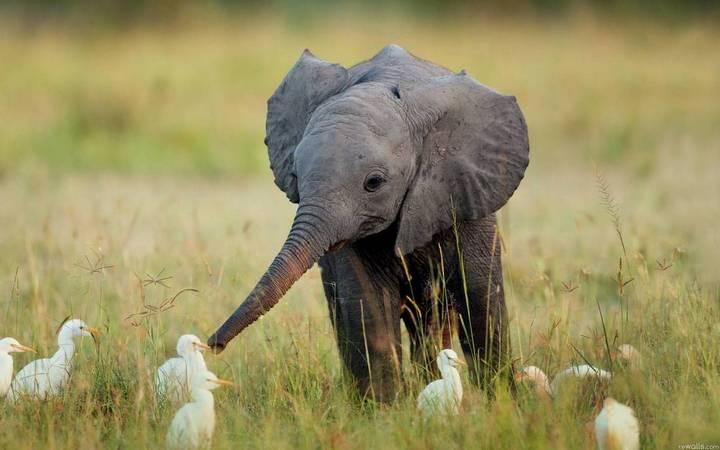 фото, животные, прикольные фото животных (17)