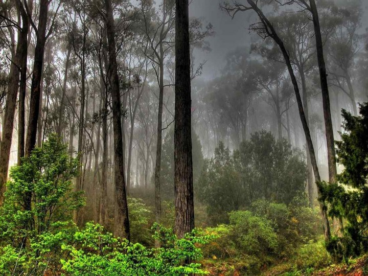 фото, природа, красивые фото природы, фотопейзажи (20)