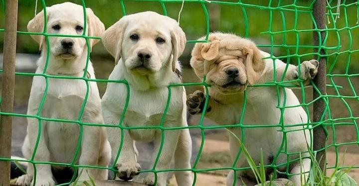 фото, животные, прикольные фото животных (1)