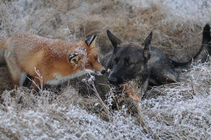 фото, животные, необычная дружба (9)