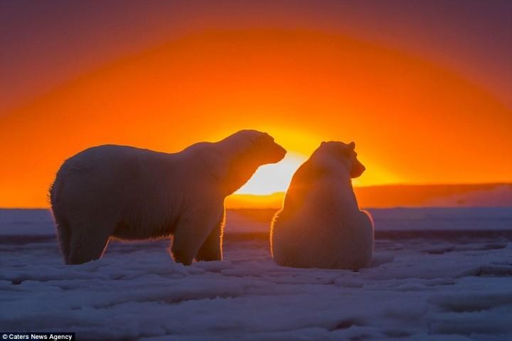 фото, животные на закате (2)