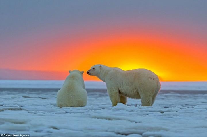 фото, животные на закате (5)