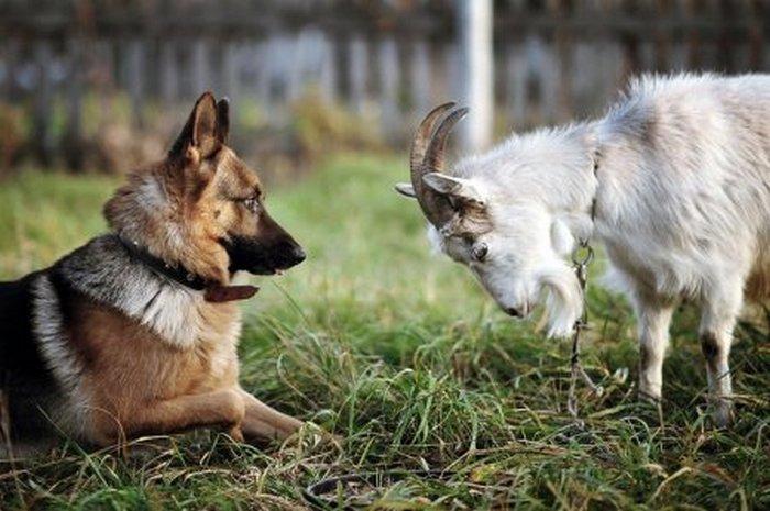 фото, животные, прикольные фото животных (13)