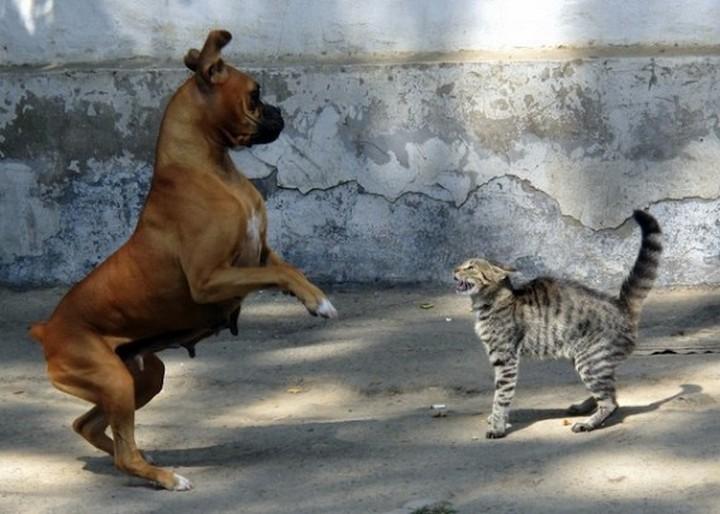 фото, животные, прикольные фото животных (5)