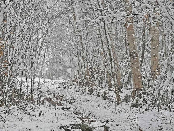 фото, природа, красивые фото природы, фотопейзажи, зима (4)