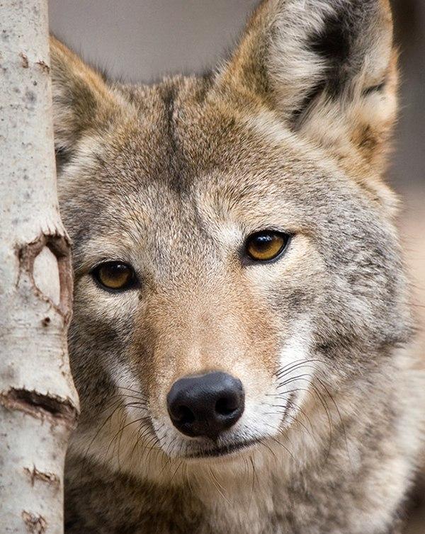 фото, животные, прикольные фото животных (9)