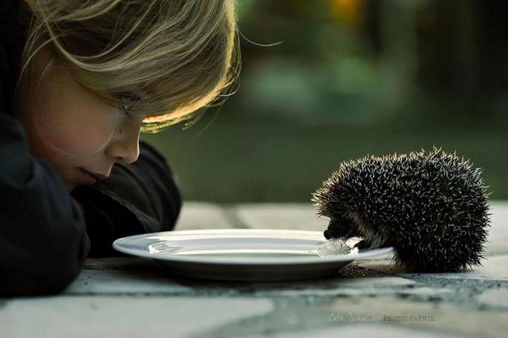 фото, животные, прикольные фото животных (11)