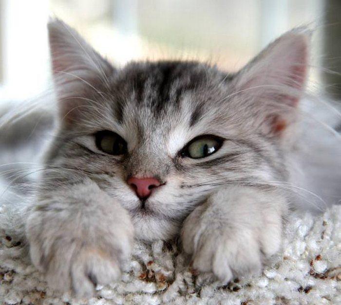 http://fotointeres.ru/wp-content/uploads/2014/01/kitten1313.jpg