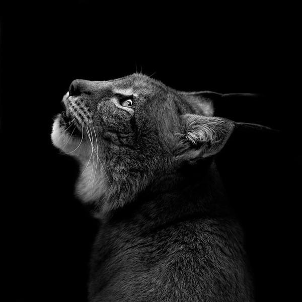 фото, животные (11)
