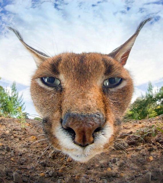Прикольные фото животных (8)