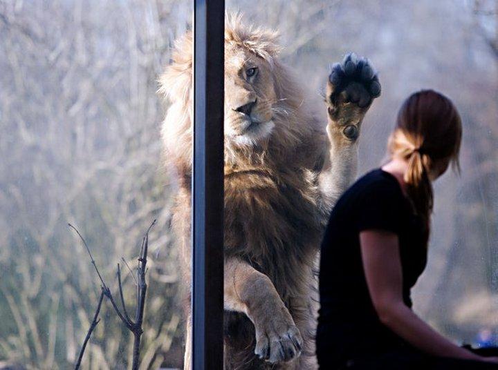 Прикольные фото животных (13)