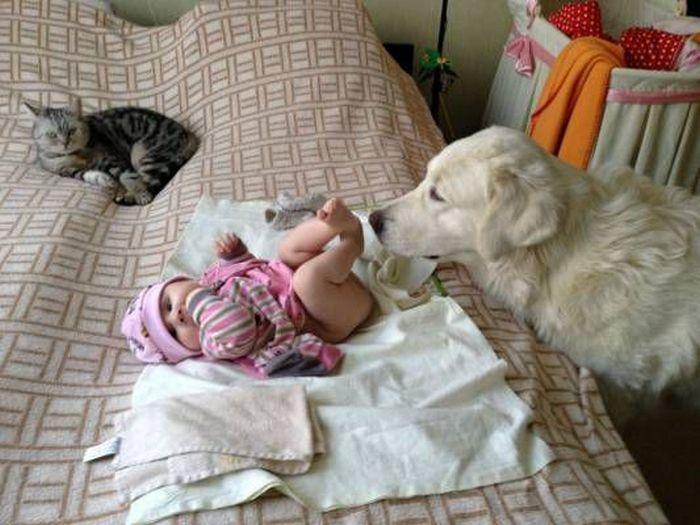 дети, животные (11)