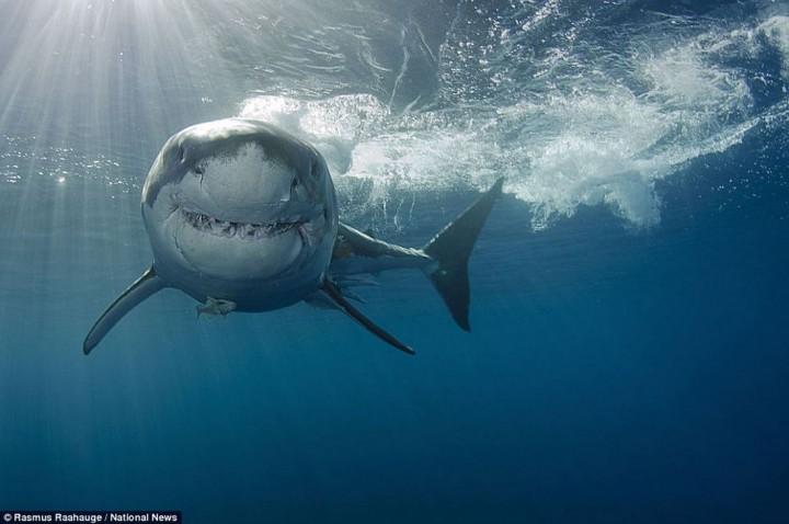 фото, океан, животные (14)