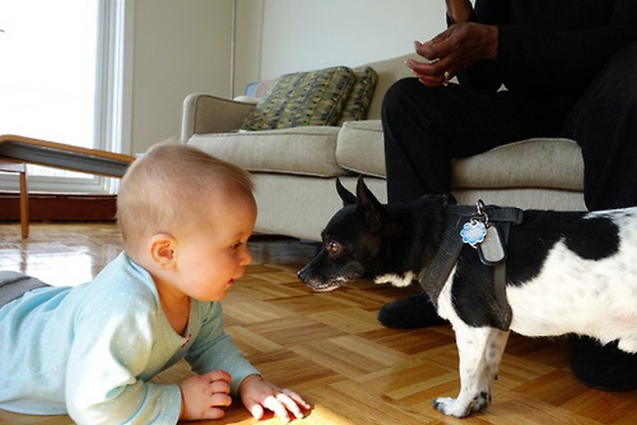 дети, животные (2)