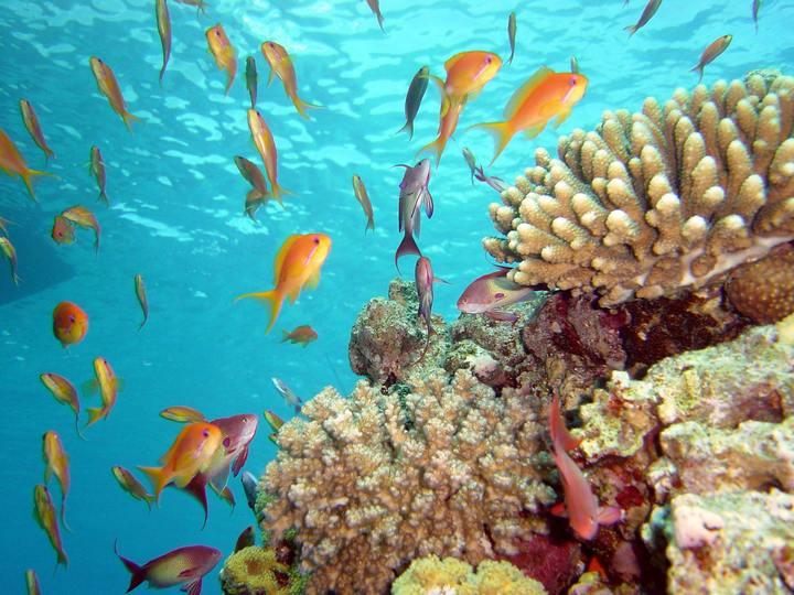 Путешествуем в Египет без пляжного отдыха (3)