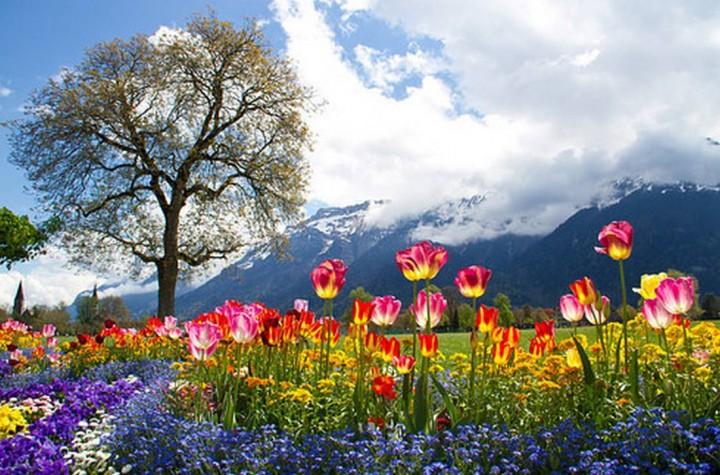 фото, природа, красивые фото природы, фотопейзажи (14)