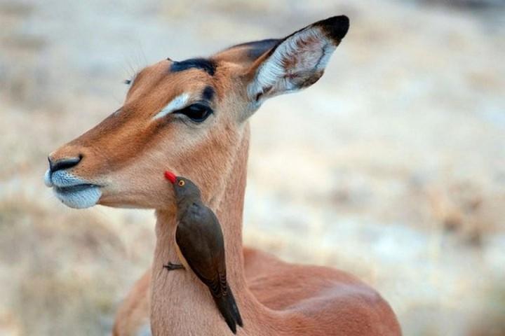 животные (2)