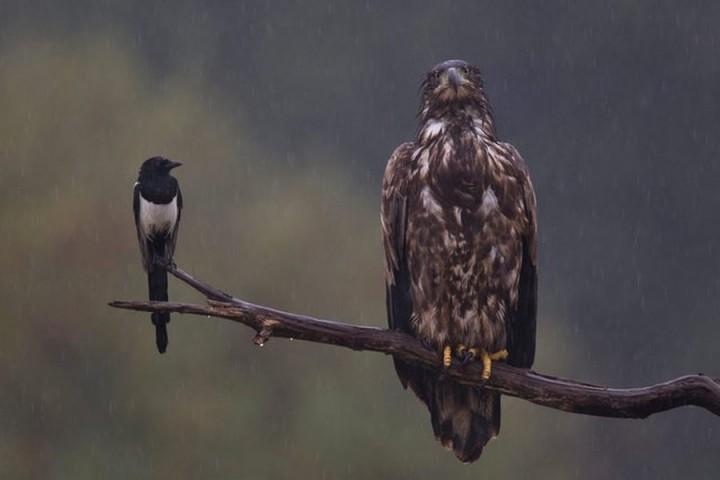 птицы (3)