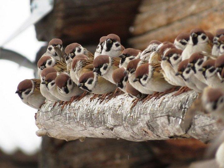 птицы (7)
