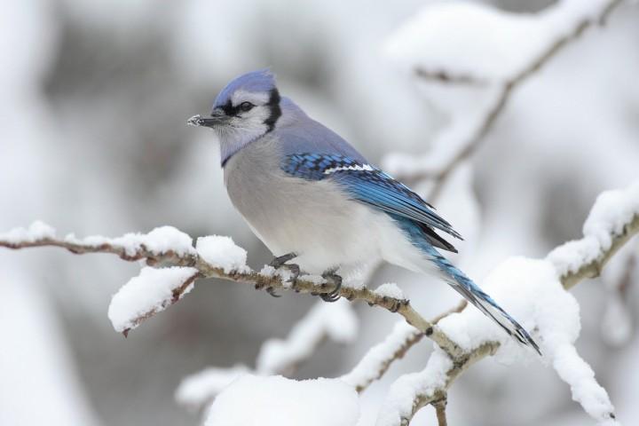 птицы (6)