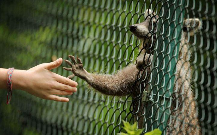 животные, юмор (4)