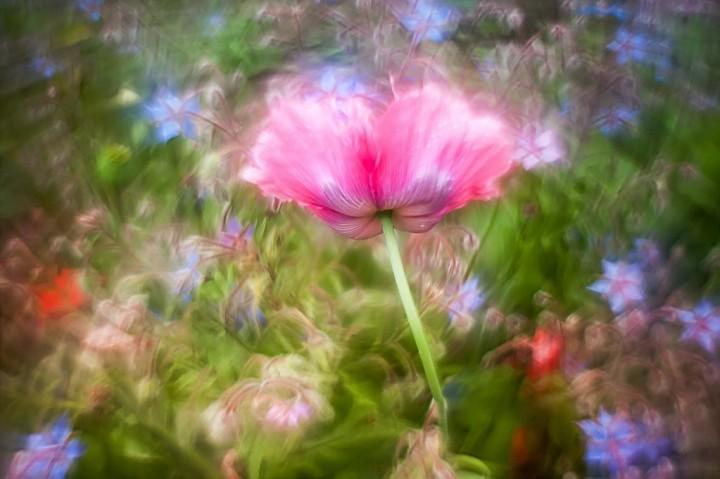 цветы, красивые фото цветов, боке (1)