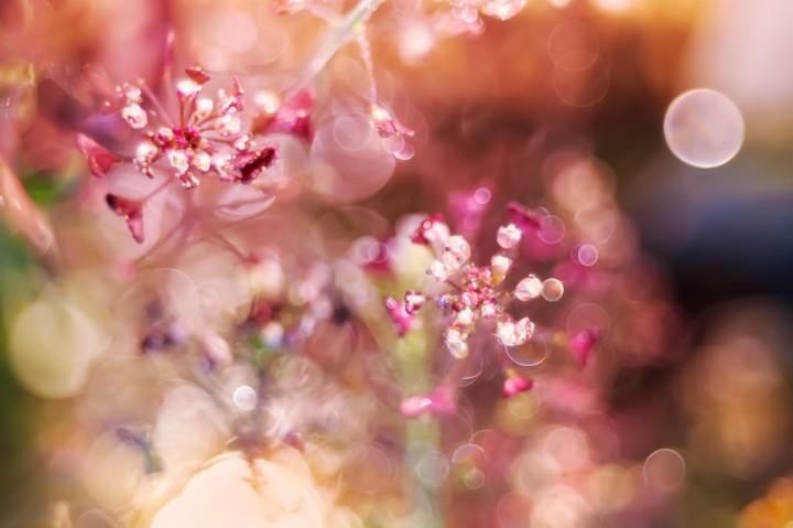 цветы, красивые фото цветов, боке (17)