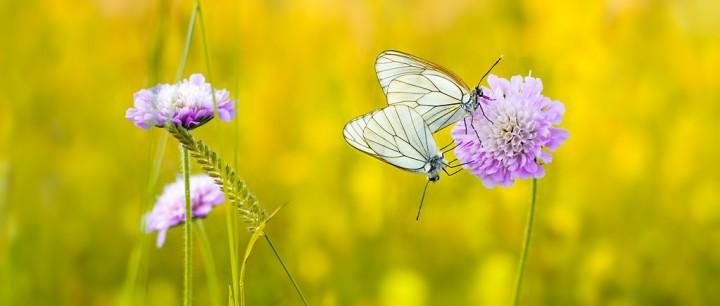 цветы, красивые фото цветов, боке (5)