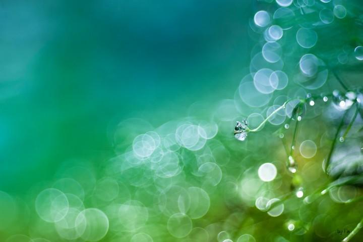 цветы, красивые фото цветов, боке (3)
