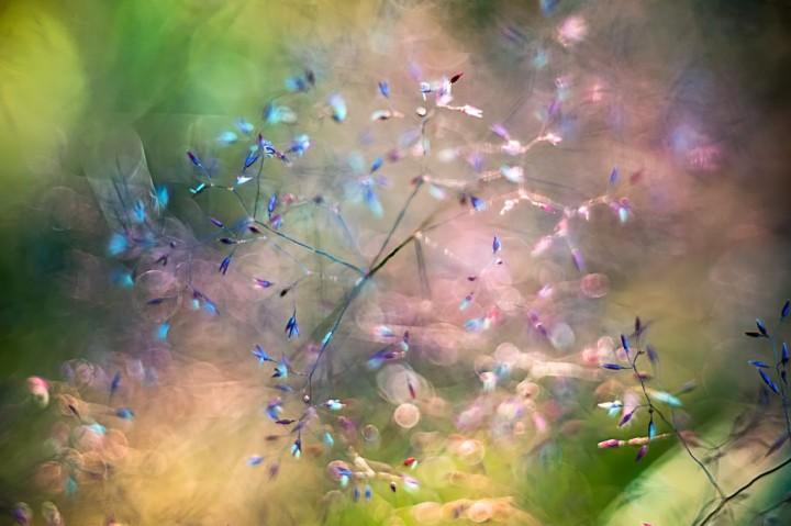цветы, красивые фото цветов, боке (20)