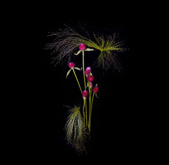 цветы, красивые фото цветов (2)