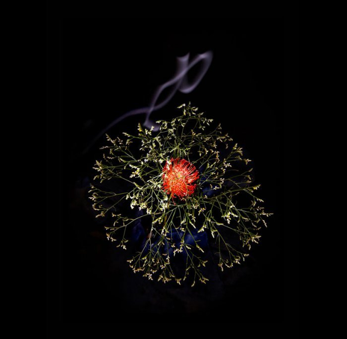 цветы, красивые фото цветов (1)
