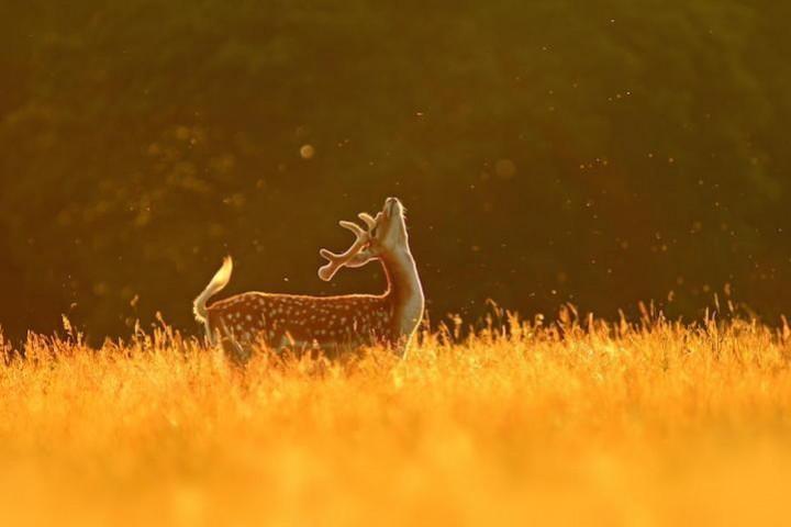 животные, прикольные фото животных (7)