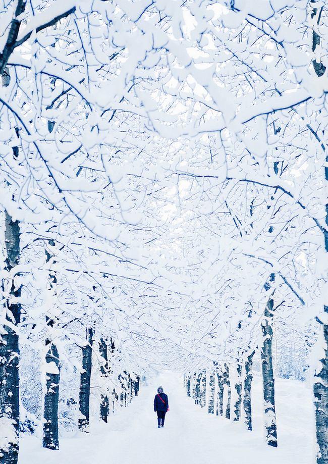 природа, красивые фото природы, фотопейзажи, зима (9)