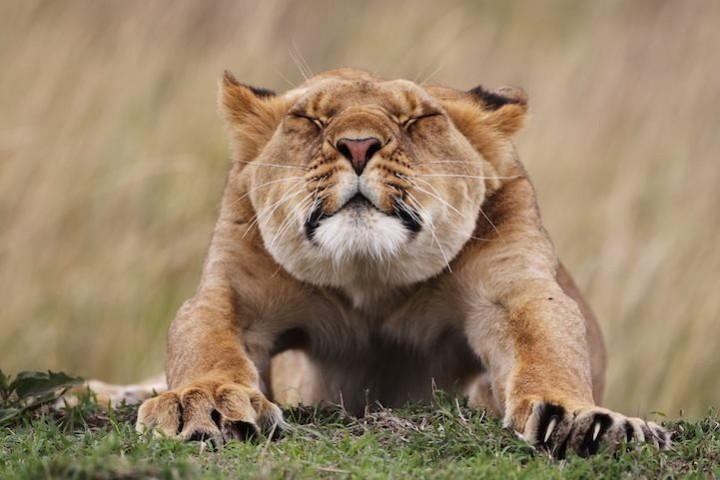 животные, прикольные фото животных (6)