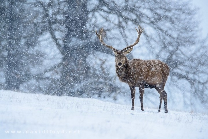 природа, красивые фото природы, фотопейзажи, зима (18)