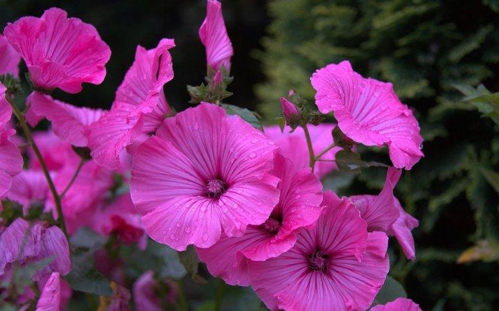 цветы, большие фото (9)