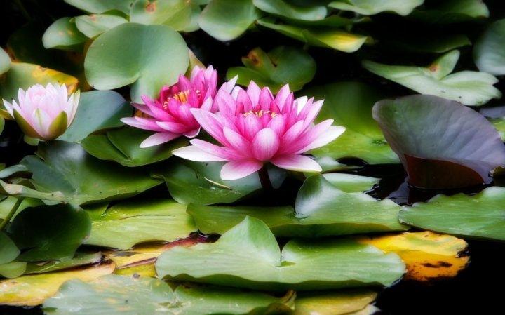 цветы, большие фото (8)
