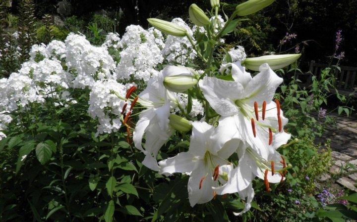 цветы, большие фото (2)