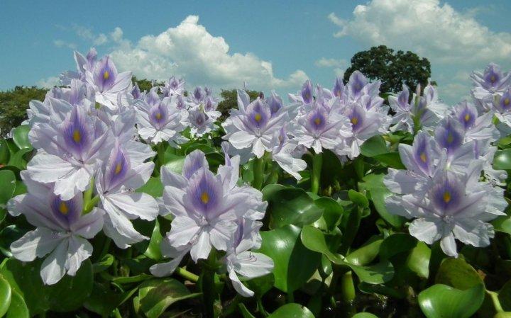 цветы, большие фото (17)