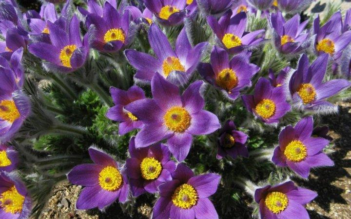 цветы, большие фото (14)